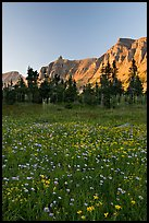 Wildflowers in meadow below the Garden Wall at sunset. Glacier National Park, Montana, USA.