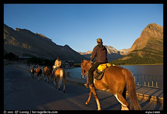 Horses on the shores of Swiftcurrent Lake, sunrise. Glacier National Park (color)
