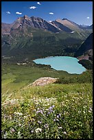 Wildflowers high above Grinnel Lake, with Allen Mountain in the background. Glacier National Park, Montana, USA.