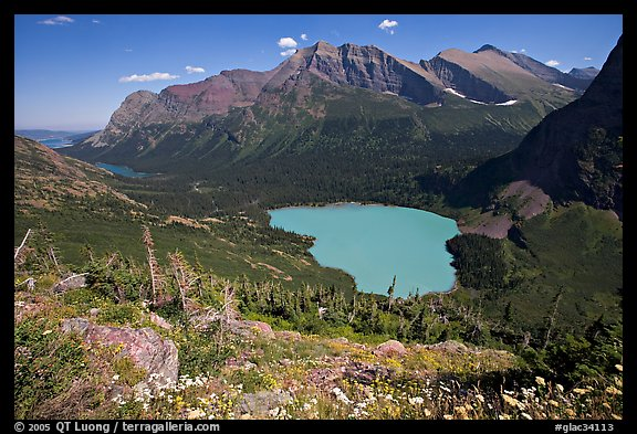 Alpine wildflowers, Grinnell Lake, and Allen Mountain. Glacier National Park, Montana, USA.