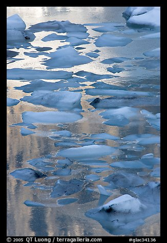 Blue icebergs floating on reflections of rock wall, late afternoon. Glacier National Park (color)