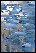 Blue icebergs floating on reflections of rock wall, late afternoon. Glacier National Park, Montana, USA.