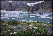 Wildflowers, Upper Grinnell Lake, Salamander Falls and Glacier. Glacier National Park, Montana, USA. (color)