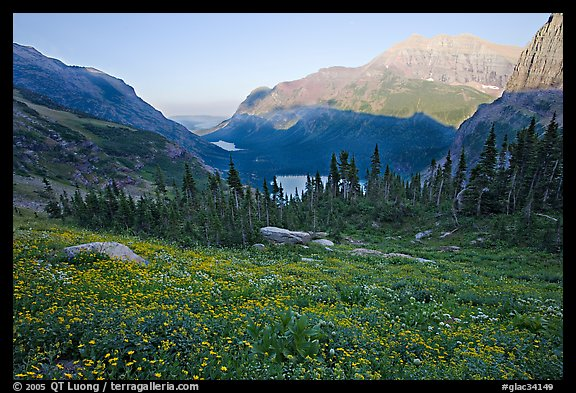 Wildflower meadow and Many Glacier Valley, late afternoon. Glacier National Park (color)