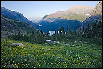 Wildflower meadow and Many Glacier Valley, late afternoon. Glacier National Park, Montana, USA.