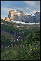 Wildflowers, Grinnell Falls, Mt Gould, and Garden Wall, sunset. Glacier National Park, Montana, USA.
