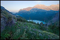 Alpine wildflowers, Grinnell Lake, and Allen Mountain, sunset. Glacier National Park, Montana, USA.