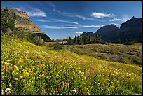 Alpine meadow with wildflowers, Logan Pass, morning. Glacier National Park, Montana, USA.