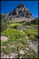Meadow with wildflowers below Clemens Mountain, Logan Pass. Glacier National Park ( color)