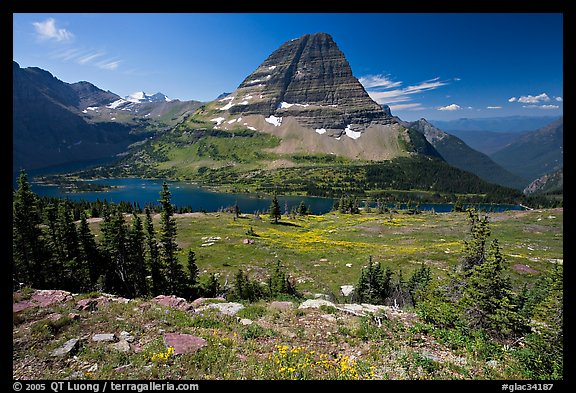 Meadows with alpine wildflowers, Hidden Lake and Bearhat Mountain behind. Glacier National Park (color)