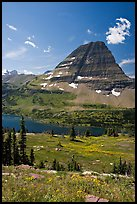 Alpine Meadows with wildflowers, Hidden Lake and Bearhat Mountain behind. Glacier National Park ( color)