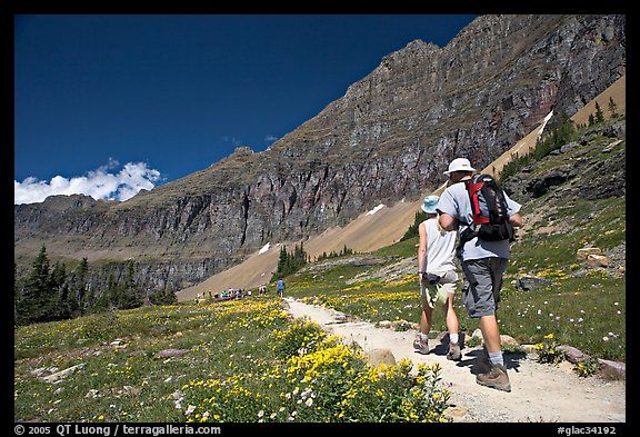 Hikers on trail amongst wildflowers near Hidden Lake. Glacier National Park, Montana, USA.