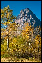 Autumn foliage and Rising Wolf Mountain. Glacier National Park ( color)