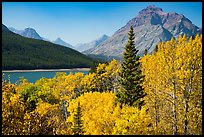 Autumn color, Rising Wolf Mountain, Lower Two Medicine Lake. Glacier National Park ( color)