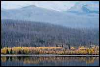 Hills with burned forest above lakeshore with autumn foliage, Saint Mary Lake. Glacier National Park ( color)