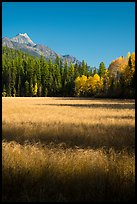 Meadow in autumn, North Fork. Glacier National Park ( color)