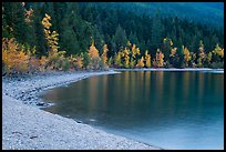 Gravel beach and trees in autun foliage, Lake McDonald. Glacier National Park ( color)