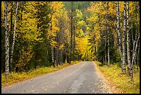 Road surrounded by fall foliage in autumn. Glacier National Park ( color)