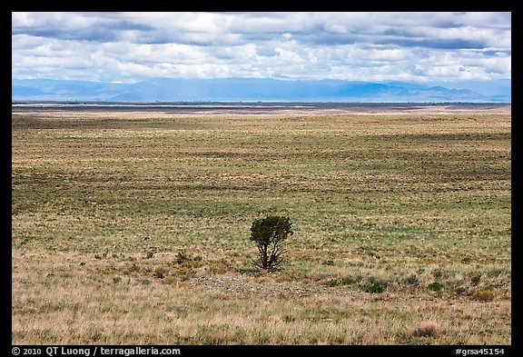 Lonely tree on plain. Great Sand Dunes National Park and Preserve (color)