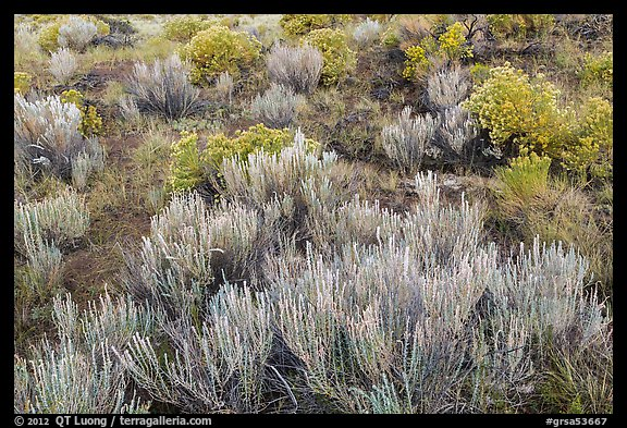 Grassland shrubs. Great Sand Dunes National Park and Preserve (color)