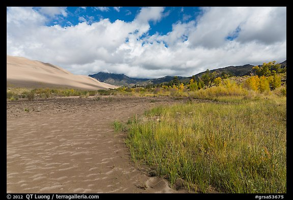 Grasses, patterns in sand of Medano Creek, sand dunes in autumn. Great Sand Dunes National Park and Preserve (color)