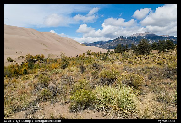 Desert shrubs, dunes and mountains. Great Sand Dunes National Park (color)