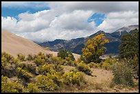 Autumn color on Escape Dunes. Great Sand Dunes National Park, Colorado, USA. (color)