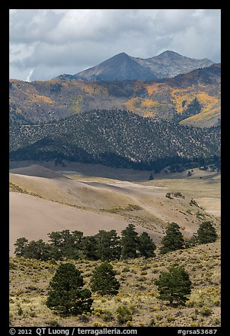 Sangre de Cristo mountains with aspen in fall foliage above dunes. Great Sand Dunes National Park and Preserve (color)
