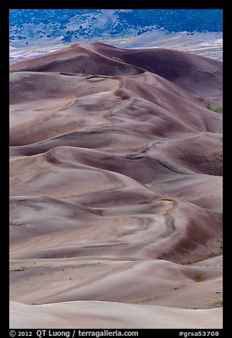 Dune field at dusk. Great Sand Dunes National Park and Preserve (color)