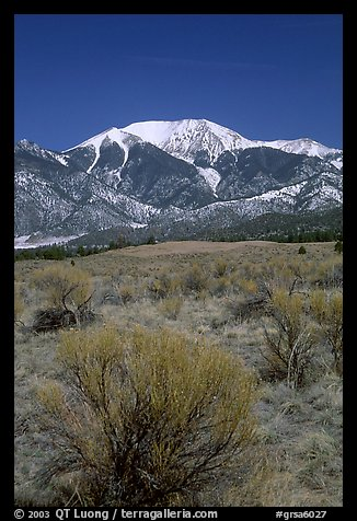 Desert-like sagebrush and snowy Sangre de Cristo Mountains. Great Sand Dunes National Park and Preserve (color)