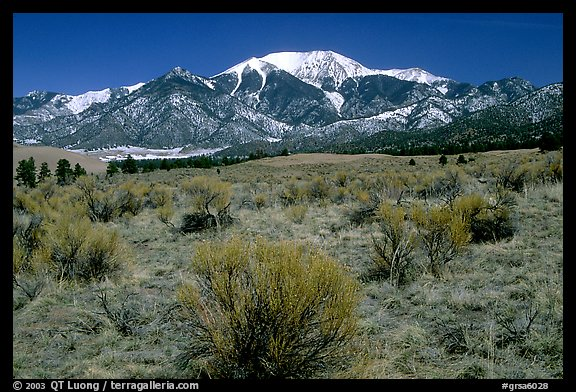 Desert-like sagebrush and snowy Sangre de Cristo Mountains. Great Sand Dunes National Park, Colorado, USA.