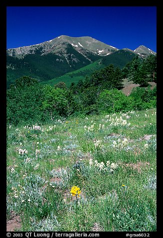 Meadow and Sangre de Cristo Mountains near Medora Pass. Great Sand Dunes National Park and Preserve (color)