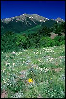 Meadow and Sangre de Cristo Mountains near Medano Pass. Great Sand Dunes National Park, Colorado, USA.
