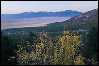 Autum Color and distant dunefield. Great Sand Dunes National Park and Preserve ( color)