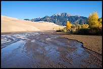 Medano Creek flowing, dunes, and trees in autumn foliage. Great Sand Dunes National Park and Preserve ( color)