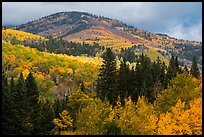 Hill blow Mt Herard covered with trees in colorful autumn foliage. Great Sand Dunes National Park and Preserve ( color)