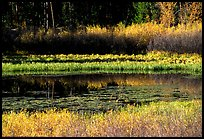 Pond with fall colors. Grand Teton National Park, Wyoming, USA. (color)