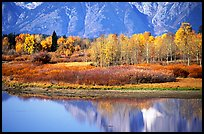Autumn colors and reflections of Mt Moran in Oxbow bend. Grand Teton National Park, Wyoming, USA. (color)