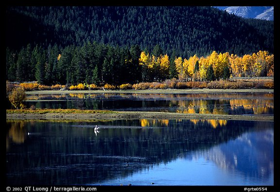 Fall foliage and reflections of Mt Moran in Oxbow bend. Grand Teton National Park (color)