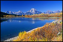Fall colors and reflections of Mt Moran and Teton range in Oxbow bend. Grand Teton National Park, Wyoming, USA. (color)