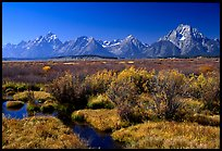 Teton range and fall colors on meadows. Grand Teton National Park, Wyoming, USA.