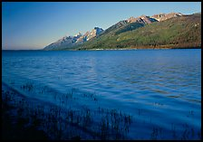 Reeds, Jackson Lake, and distant Teton Range, early morning. Grand Teton National Park, Wyoming, USA. (color)