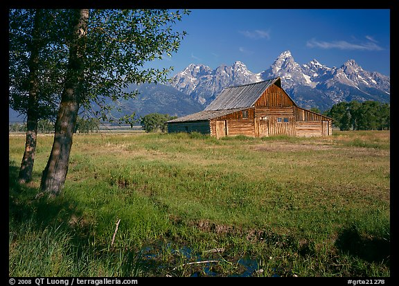 Trees, pasture and Old Barn on Mormon row, morning. Grand Teton National Park (color)