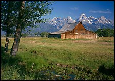 Trees, pasture and Old Barn on Mormon row, morning. Grand Teton National Park, Wyoming, USA.