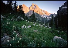 Columbine and Grand Teton at sunset. Grand Teton National Park, Wyoming, USA.