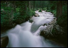 Cascade Creek and dark forest. Grand Teton National Park, Wyoming, USA.