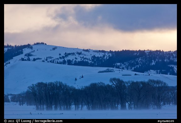 Cottonwoods and hills, winter sunrise. Grand Teton National Park (color)