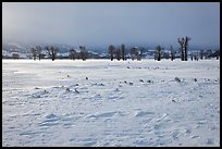 Snowy Antelope flats with snowdrift. Grand Teton National Park ( color)
