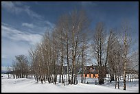 Bare cottonwoods and Moulton homestead. Grand Teton National Park, Wyoming, USA. (color)