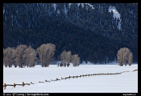 Long fence, cottonwoods, and hills in winter. Grand Teton National Park (color)